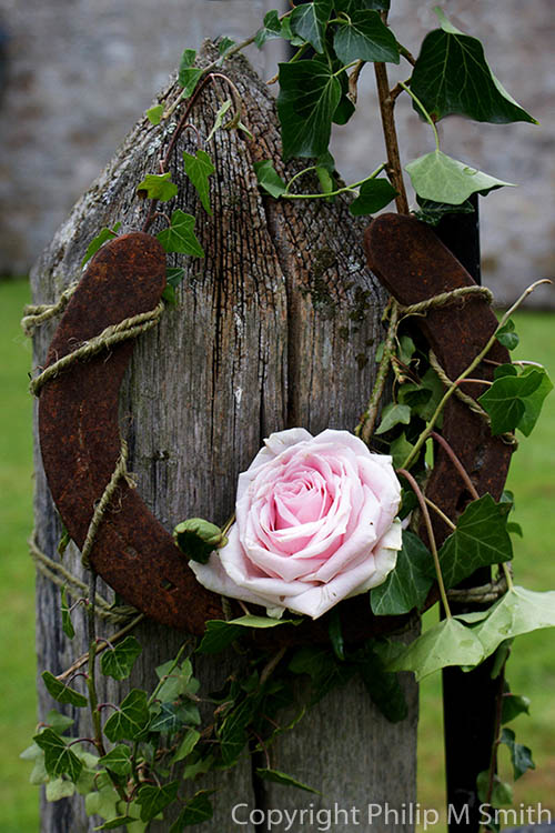 17.7559 Wedding Rose