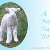 201728 Baby Boy