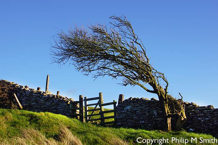 174762 Winded bush.