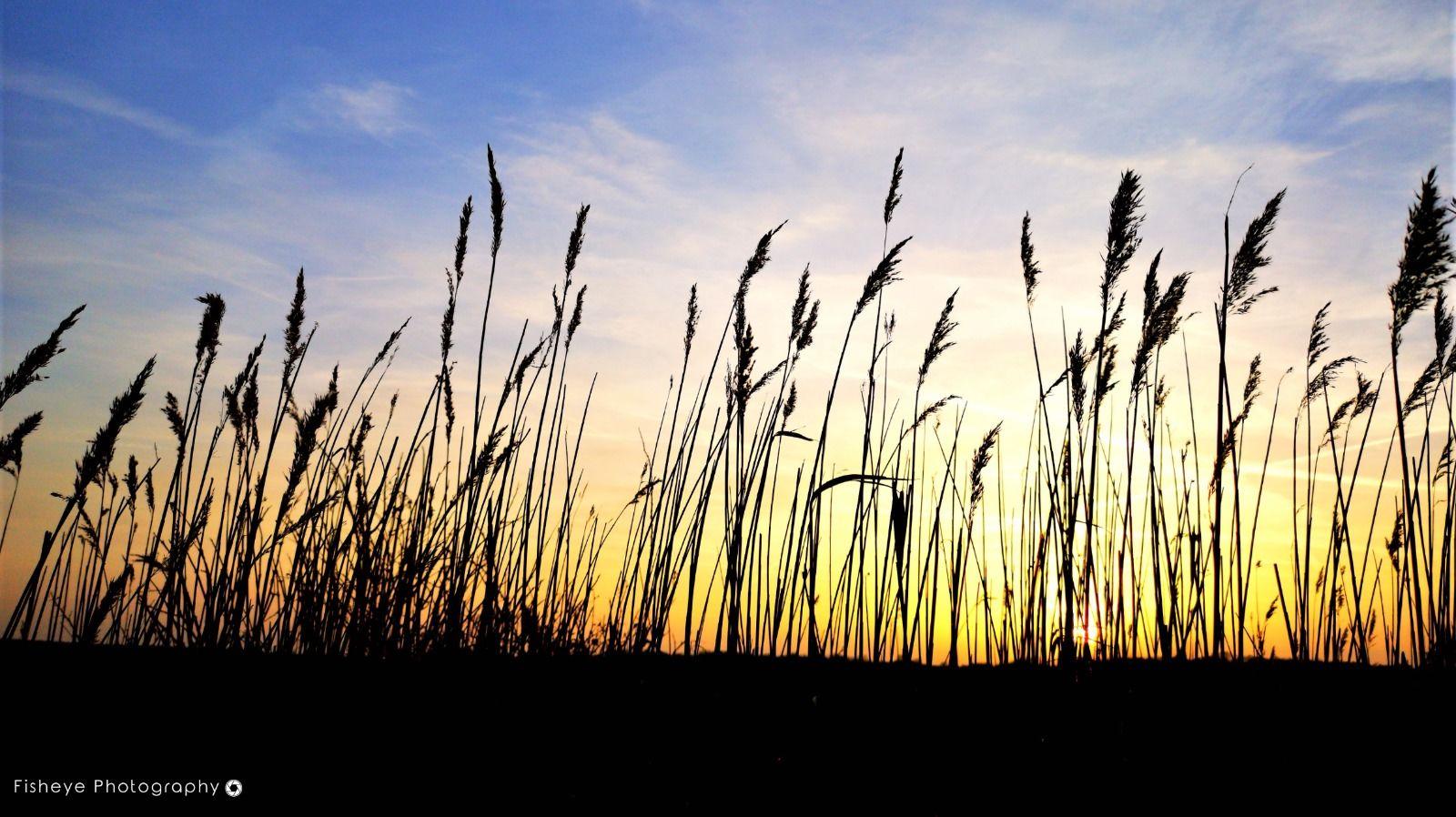 Minsmere Grass