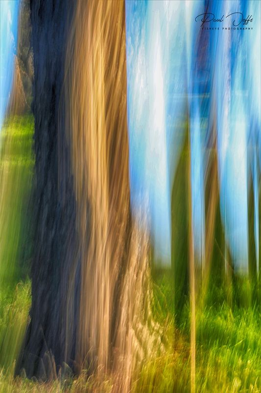 Abstract Woodland