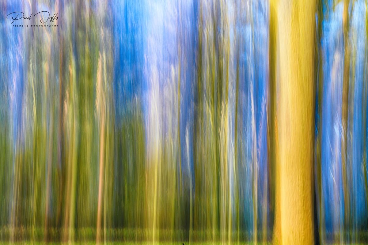 Abstract Pine Woods