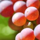 grapes06