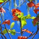 brilliant leaves 2