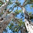 peely trees