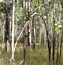 tree fields