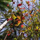 brilliant leaves...