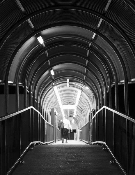Funnelweb, Sydney