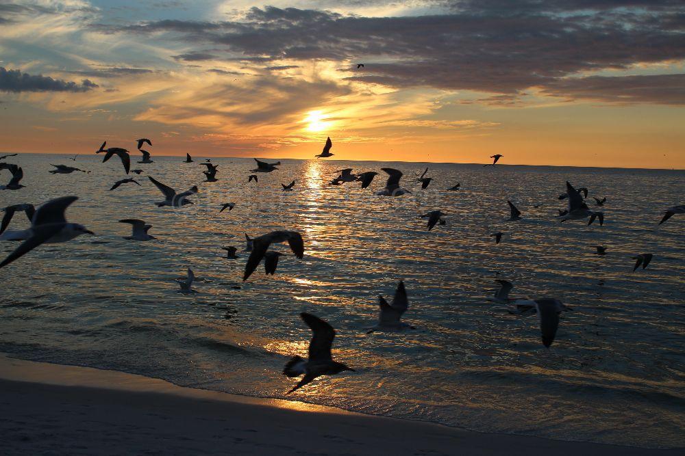Flight at Dusk, Naples, Florida