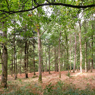 #1008 Woodland Scene Mortimer Forest