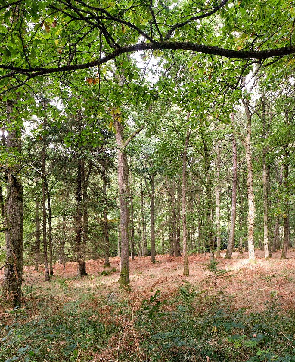Woodland Scene Mortimer Forest