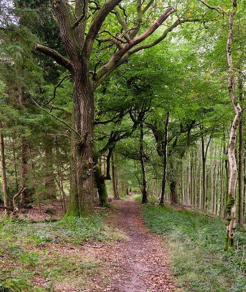 Woodland Scene towards Craven Arms