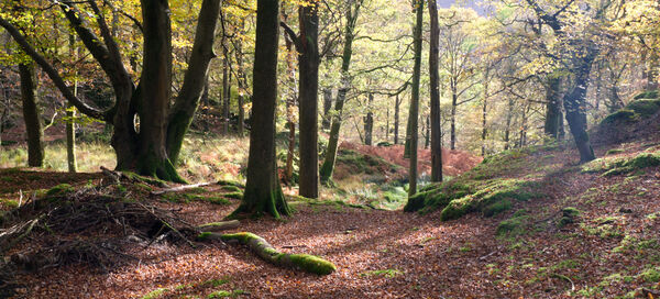 Woodland View Grassmere Cumbria