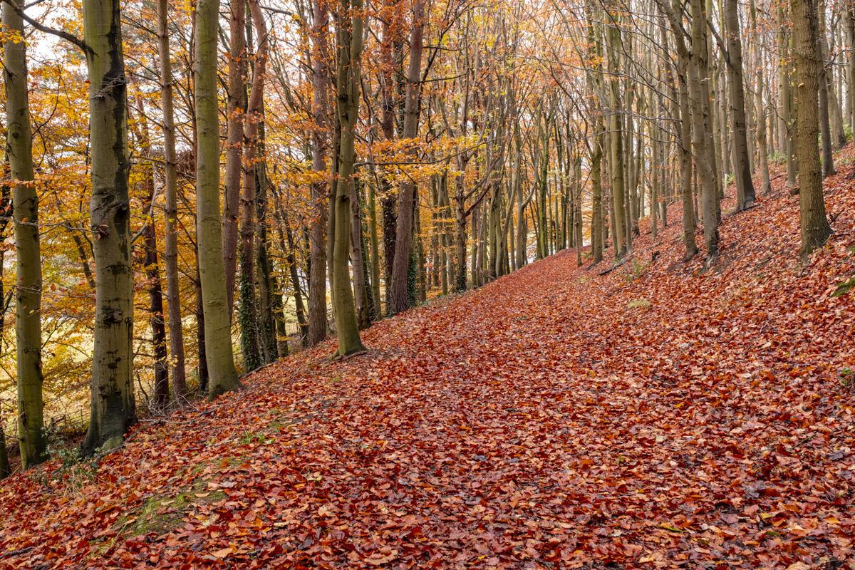 Woodland in Autumn Clours