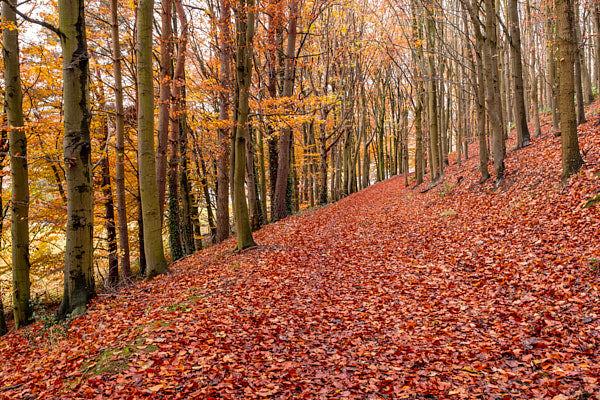 woodland in Autumn Colour
