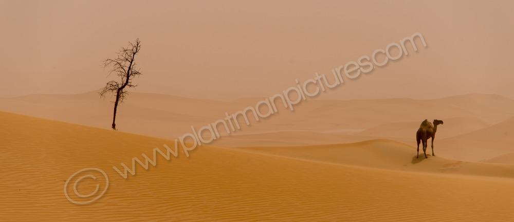 Two Alone  a dusty day in the Khatim Desert Abu Dhabi