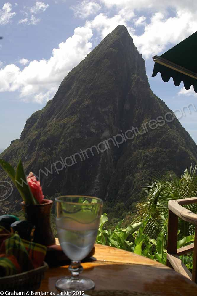 One of the two Piton mountains  from the Dashine Restaurant