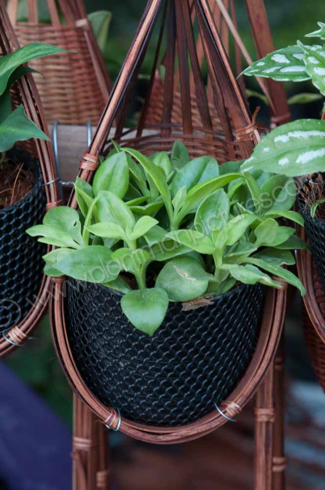 Small wall plant