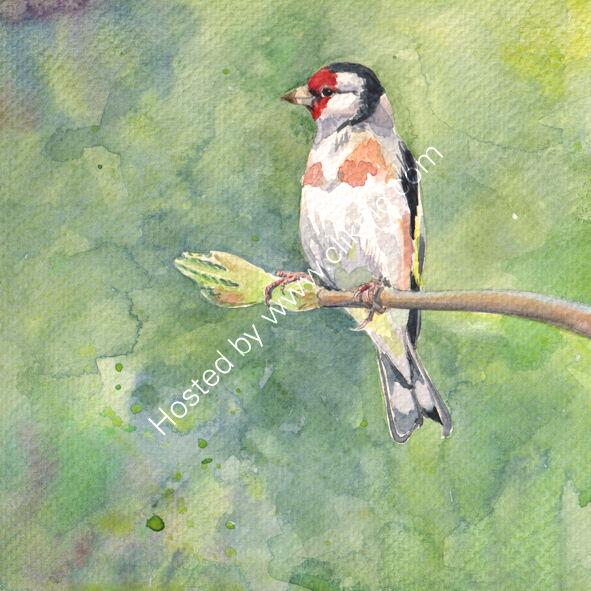 Goldfinch on green background, bird art