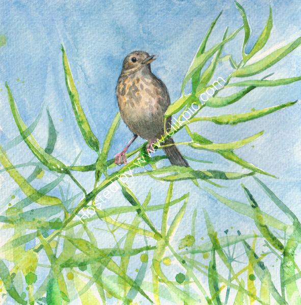 bird singing on seed pods, bird art