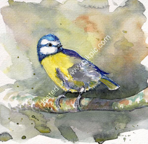 A bluetit on a grey green background, bird art