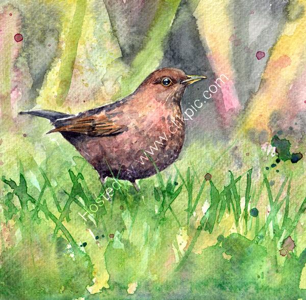 female blackbird watercolour, bird art