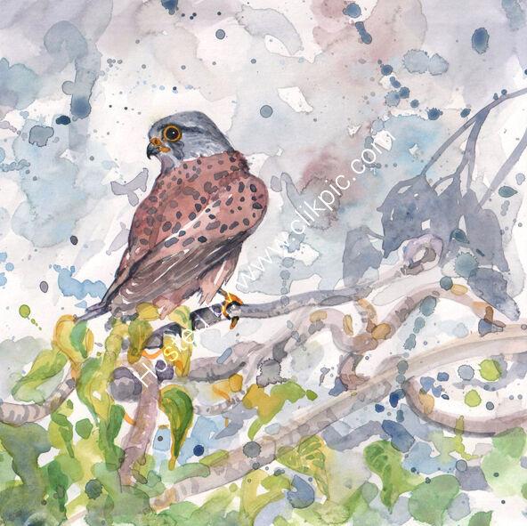 Watercolour Kestrel on grey background, bird art