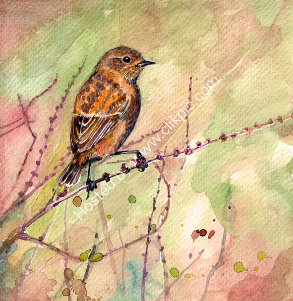 Stonechat on pink and green, bird art