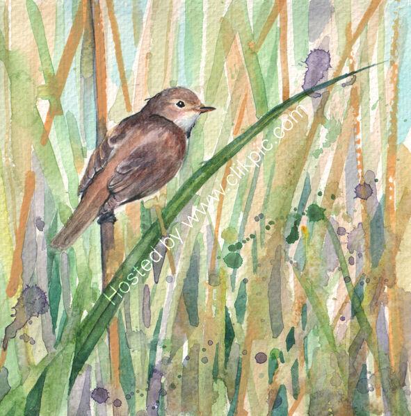 Reed Warbler , bird art