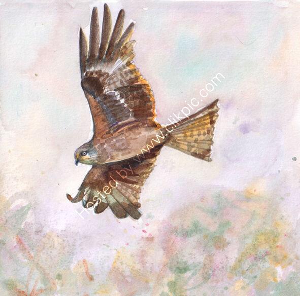 Red Kite flying in misty sky, bird art