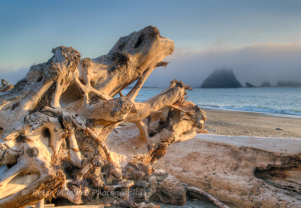 Skeletal Tree