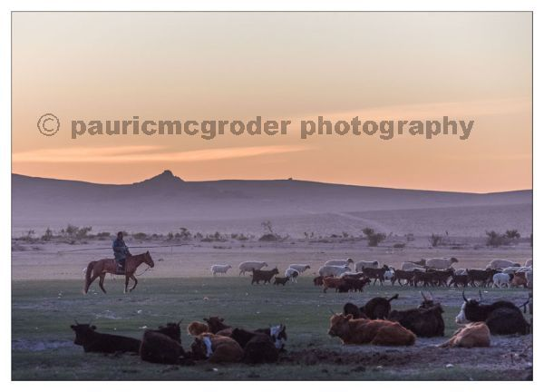 Gathering the herd at sunrise