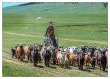 Relocating herd to summer pastures
