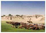 More herding