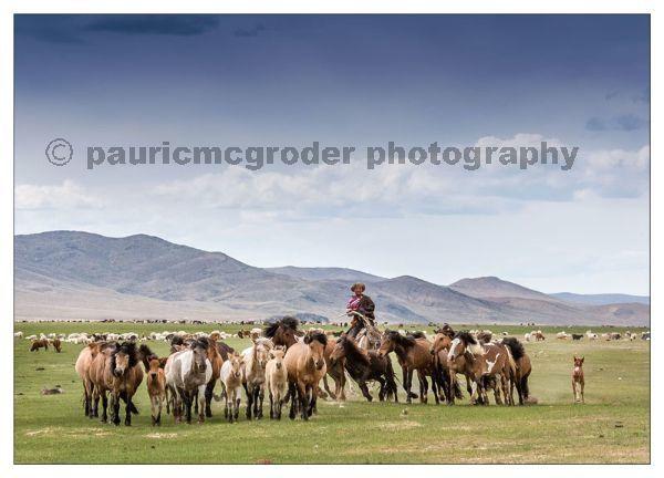 Herding the horses