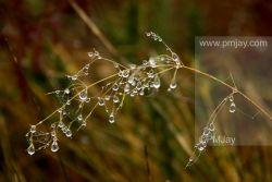 Natures tear drops