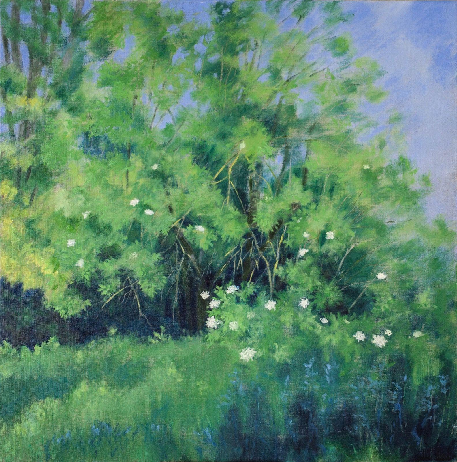 Summer Elderberry