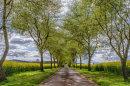 The Driveway by Lyn Yelland