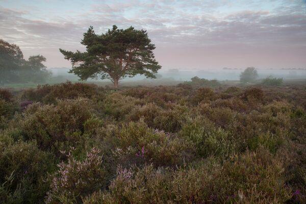 A Pre Dawn Westledon Heath