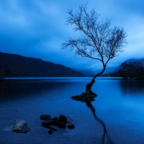 Lone Tree Llyn Padarn 2