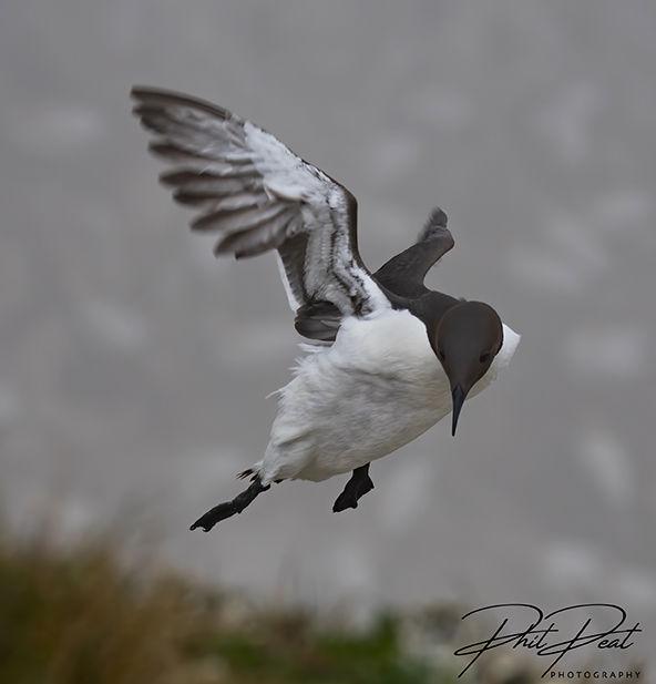 Windy Landing