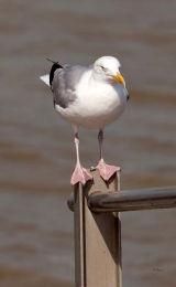 Balancing Seagull Code BAS