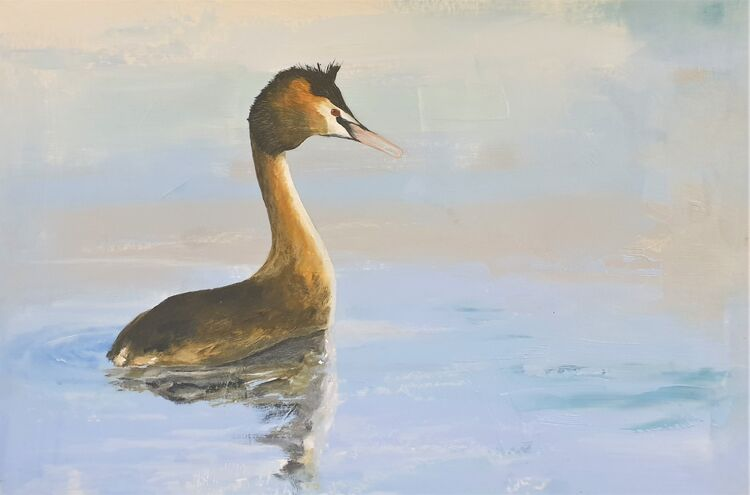 2020 Great Crested Grebe duck 1 760x510 o-b