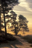 Dawn at Leith Hill