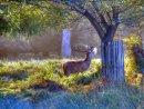 Deer At Rchmond Park