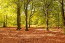 Autumn Colour Near Ranmore Commom