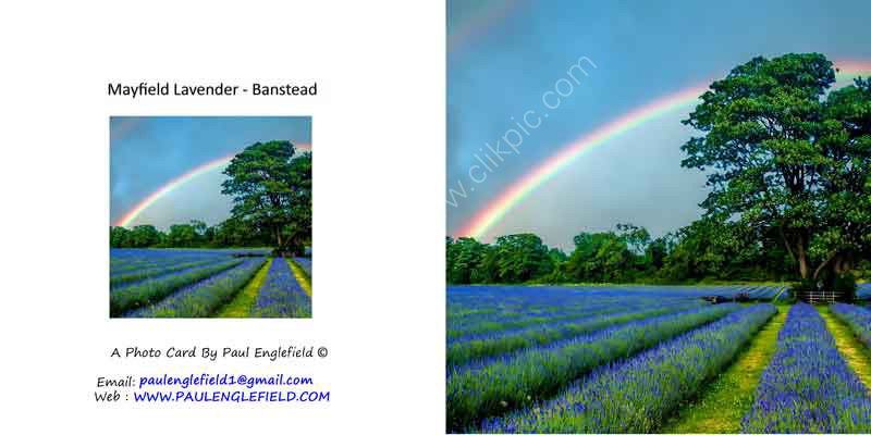 Rainbow over Mayfield-Lavender fields