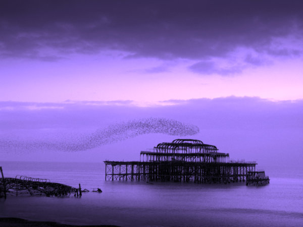 Murmuration - West Pier - Brighton - Violet - 2006