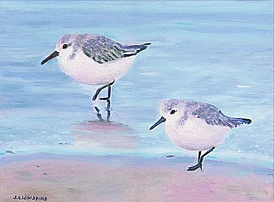 Two Sanderlings