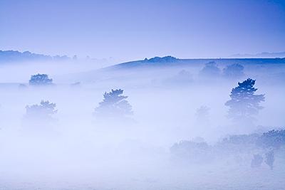 Spring Mist Homlsley